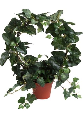 Botanic-Haus Künstliche Zimmerpflanze »Efeubogen im Topf« kaufen