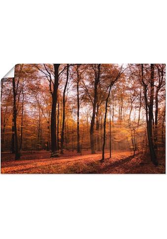 Artland Wandbild »Sonnenaufgang im Herbst II«, Wald, (1 St.), in vielen Größen &... kaufen