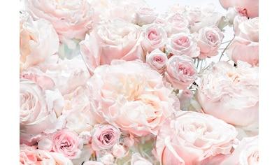 Komar Fototapete »Spring Roses«, bedruckt-Wald-geblümt, ausgezeichnet lichtbeständig kaufen