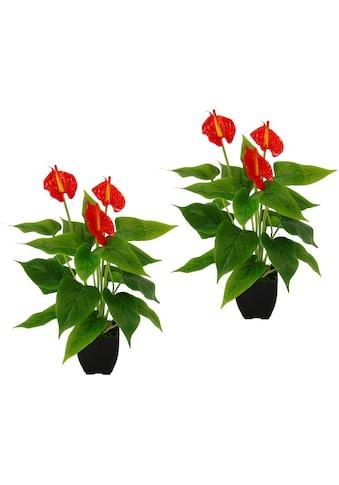 I.GE.A. Kunstpflanze »Anthurienpflanze« kaufen