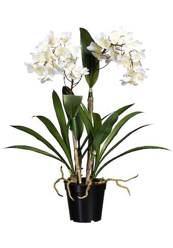 Creativ green Kunstorchidee »Dendrobie«, im Kunststofftopf kaufen