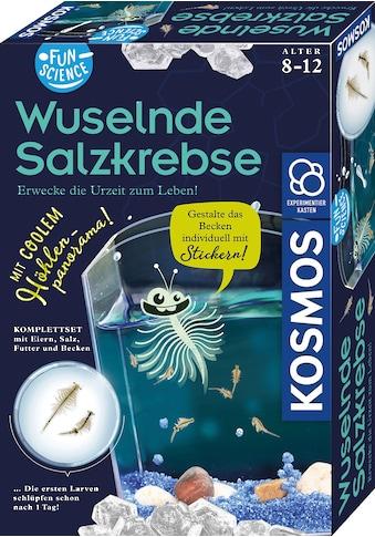 Kosmos Experimentierkasten »Fun Science Wuselnde Salzkrebse«, Made in Germany kaufen