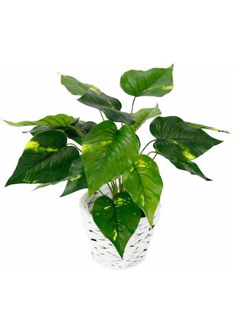 I.GE.A. Kunstpflanze »Pothospflanze in Wasserhyazinthentopf« kaufen