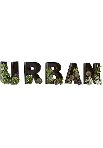 Schneider Bild »Schriftzug Urban Schwarz« kaufen