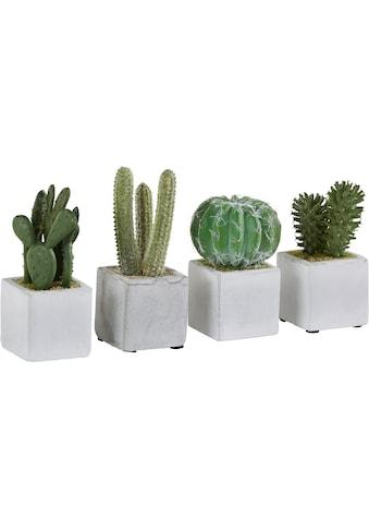 Creativ green Kunstkaktus »Kakteen« (Set, 4 Stück) kaufen