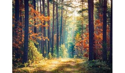 PAPERMOON Fototapete »Autumn Forest Sun Rays«, Vlies, in verschiedenen Größen kaufen