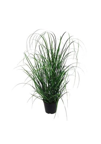 Creativ green Kunstgras »Gras« kaufen