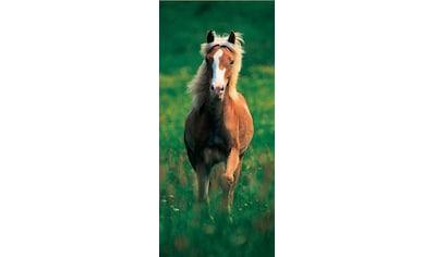 PAPERMOON Fototapete »Haflinger Horse  -  Türtapete«, BlueBack, 2 Bahnen, 90 x 200 cm kaufen