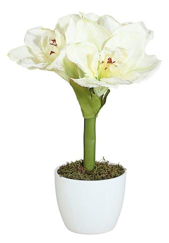 Creativ green Kunstpflanze »Amaryllis« (Set, 2 Stück) kaufen