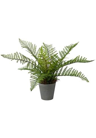 Creativ green Kunstpflanze »Farn«, im Paperpot kaufen