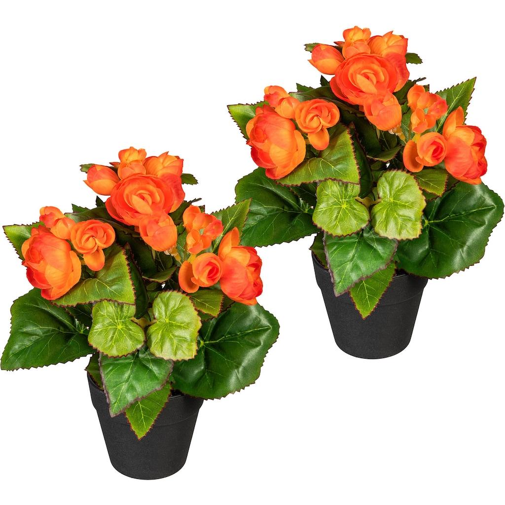 DELAVITA Künstliche Zimmerpflanze »Eleonore«, 2er Set