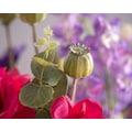 Blütenwerk Kunstblume »Let's Dance«