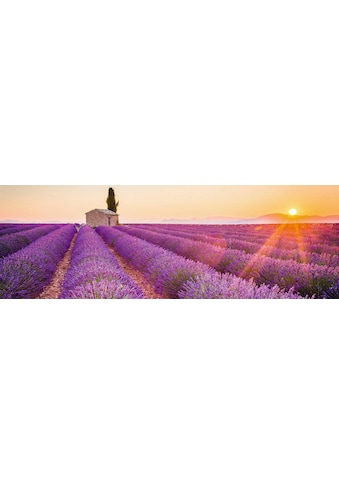 Home affaire Deco-Panel »Lavendel Horizont« kaufen
