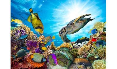 PAPERMOON Fototapete »Coral Reef Fiji«, Vlies, in verschiedenen Größen kaufen