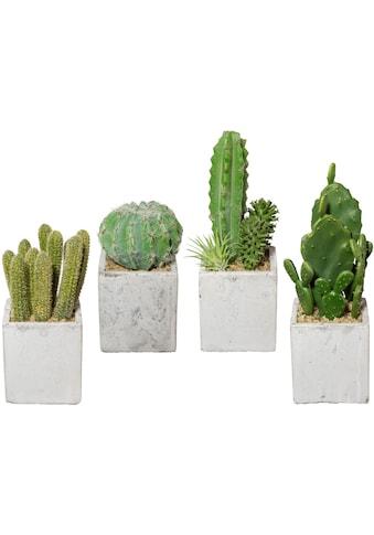 Creativ green Kunstkaktus »Kaktus« (4 Stück) kaufen