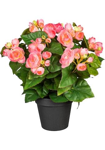 DELAVITA Künstliche Zimmerpflanze »Eleonore« kaufen