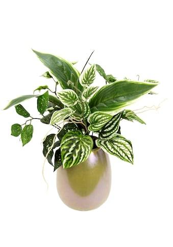 I.GE.A. Kunstpflanze »Mixed-Hostabusch in Vase« kaufen