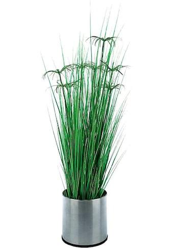 Schneider Kunstpflanze »Zyperngras« kaufen