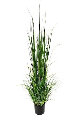 I.GE.A. Kunstpflanze »Gras im Topf« kaufen