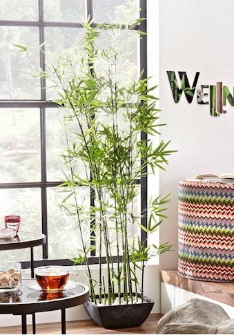 Schneider Kunstpflanze »Bambus« kaufen