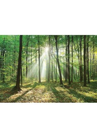 Consalnet Vliestapete »Wald in der Sonne«, verschiedene Motivgrößen, für die Küche kaufen