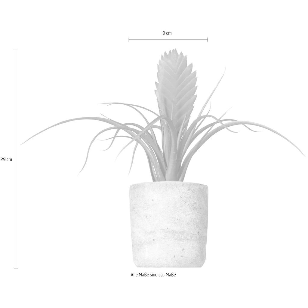 Creativ green Kunstpflanze »Tillandsie Soledo«