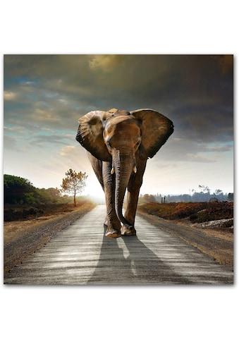 Premium collection by Home affaire Acrylglasbild »Elefant« kaufen