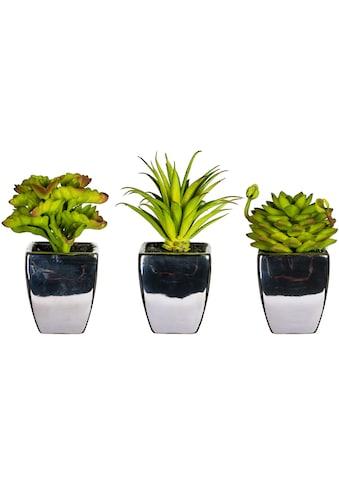 Leonique Künstliche Zimmerpflanze »Loreen«, 3er Set kaufen