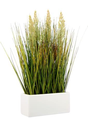 I.GE.A. Kunstgras »Gras«, in Keramikschale kaufen