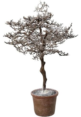 Kunstbaum »Hainbuche im Topf«, mit zauberhaftem Schnee kaufen