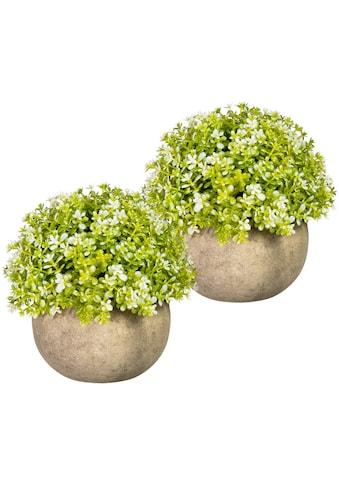Creativ green Künstliche Zimmerpflanze »Miniblattkugel«, 2er Set, im Paperpot kaufen