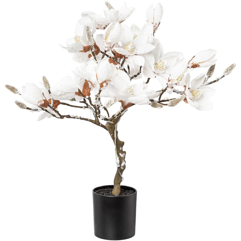LED Baum »Magnolie«, Warmweiß, beschneit, Höhe ca. 58 cm, mit 20 LEDs