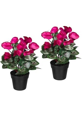 Creativ green Künstliche Zimmerpflanze »Alpenveilchen«, 2er Set kaufen