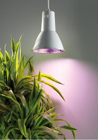 BIOGREEN Pflanzenlampe »L 15«, für Gewächshäuser, 15 Watt kaufen