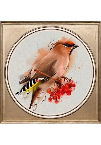 queence Acrylglasbild »Bunter Vogel I« kaufen