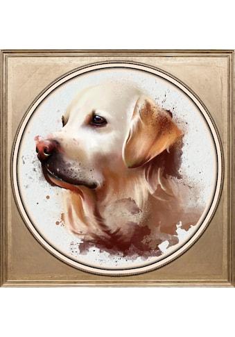 queence Acrylglasbild »Golden Retriever« kaufen