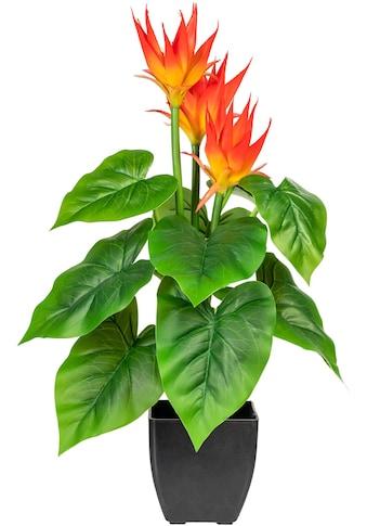 DELAVITA Künstliche Zimmerpflanze »Warnow« kaufen