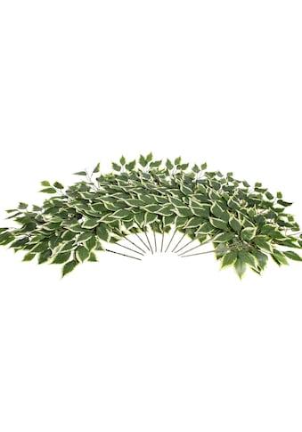 Botanic-Haus Kunstzweig »Ficuszweig« kaufen