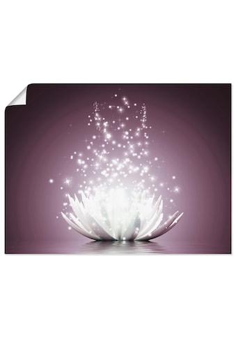Artland Wandbild »Magie der Lotus - Blume« kaufen