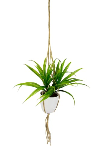 I.GE.A. Kunstpflanze »Dracena«, in Hängeampel kaufen