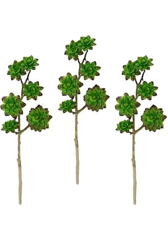 I.GE.A. Kunstpflanze »Sukkulentenzweig«, 3er Set kaufen