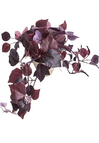 Botanic-Haus Künstliche Zimmerpflanze »Hängebusch« kaufen