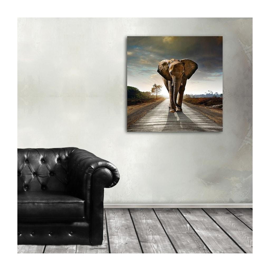 Home affaire Acrylglasbild »Elefant«, 50/50 cm