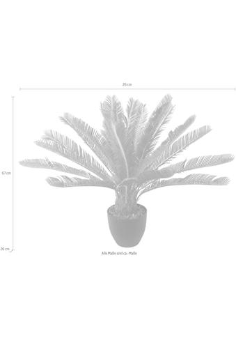 I.GE.A. Kunstpflanze »Cycaspalme im Topf« kaufen