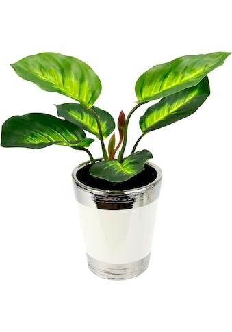 I.GE.A. Kunstpflanze »Pothospflanze im Topf« kaufen