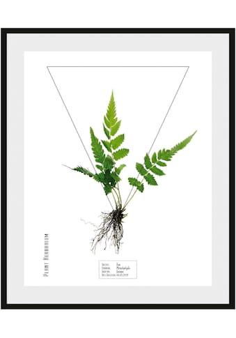 andas Bild »Pflanze« kaufen