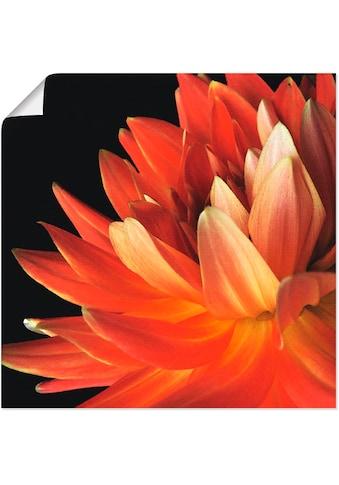 Artland Wandbild »Rote Dahlie«, Blumen, (1 St.), in vielen Größen & Produktarten -... kaufen
