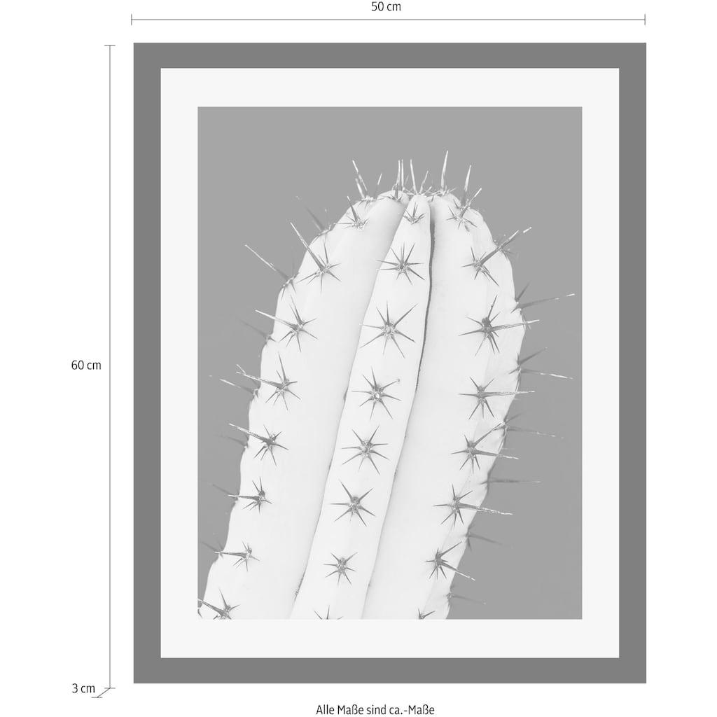 queence Bild »Kaktus«, in 3 Größen, gerahmt
