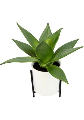 I.GE.A. Kunstpflanze »Sukkulente«, Im Topf mit Gestell kaufen