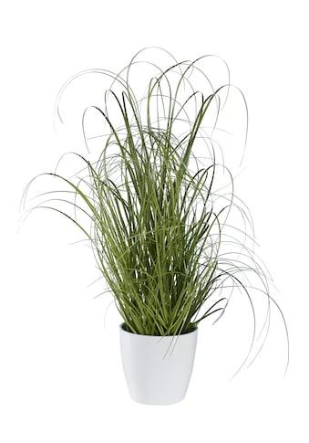 Deko-Pflanze Grasbusch kaufen